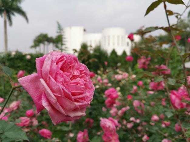 圖2 浪漫天然造景,台北春遊首選絕美拍攝景點