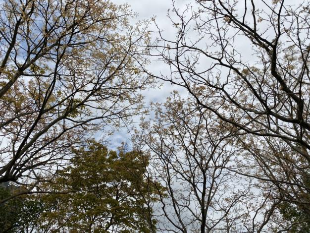 漫步林下、仰望天空,在國內也能欣賞美景