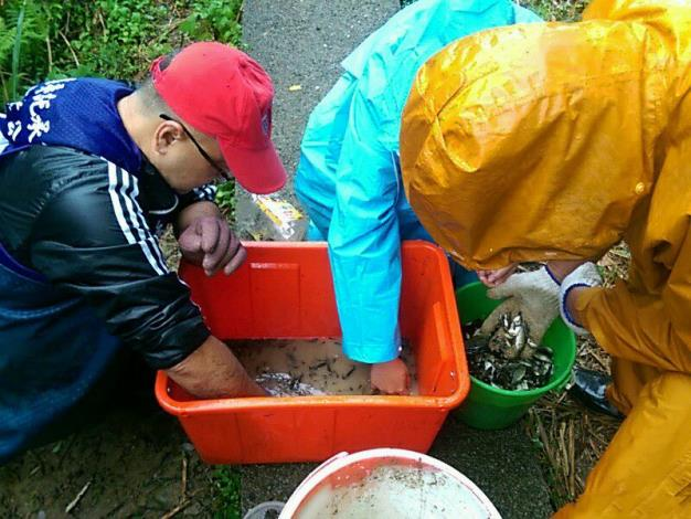 圖6. 公園維護日常-外來種魚類清除作業