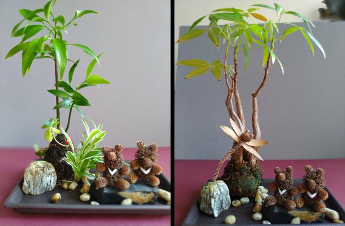 圖5.8月28日「療癒苔球果實森林DIY」(材料費100元)