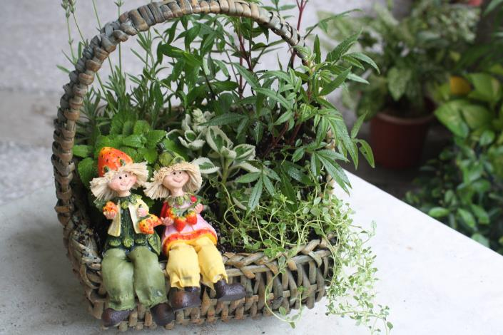 圖3.7月31日「香草植物五感心體驗」