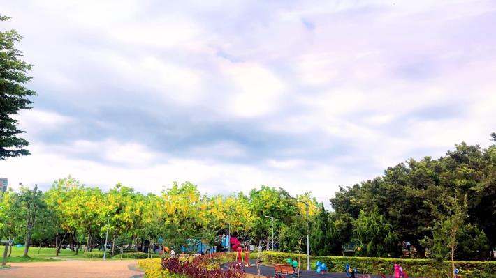 圖二美崙公園阿勃勒金黃花海