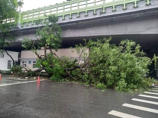 (圖1)辛亥路1段有樹木過度傾斜而有貨車撞擊造成事故