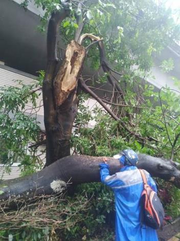 (圖2)辛亥路1段區域樹木主幹歪斜易造成公共安全危險