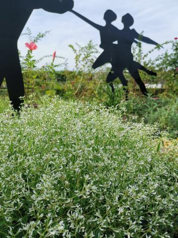 圖1夜空繁星般細密的「雪花草」,與跳舞的雕塑搭配格外引人注目。