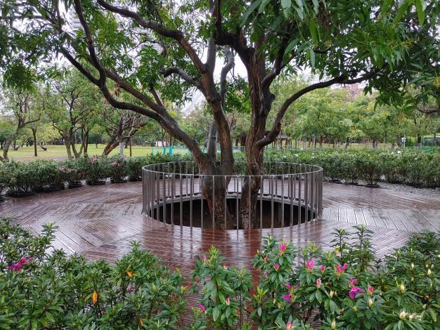 圖2.觀景平台除了可遠眺大生態池鳥類生態還可欣賞落羽松步道錯落景致。