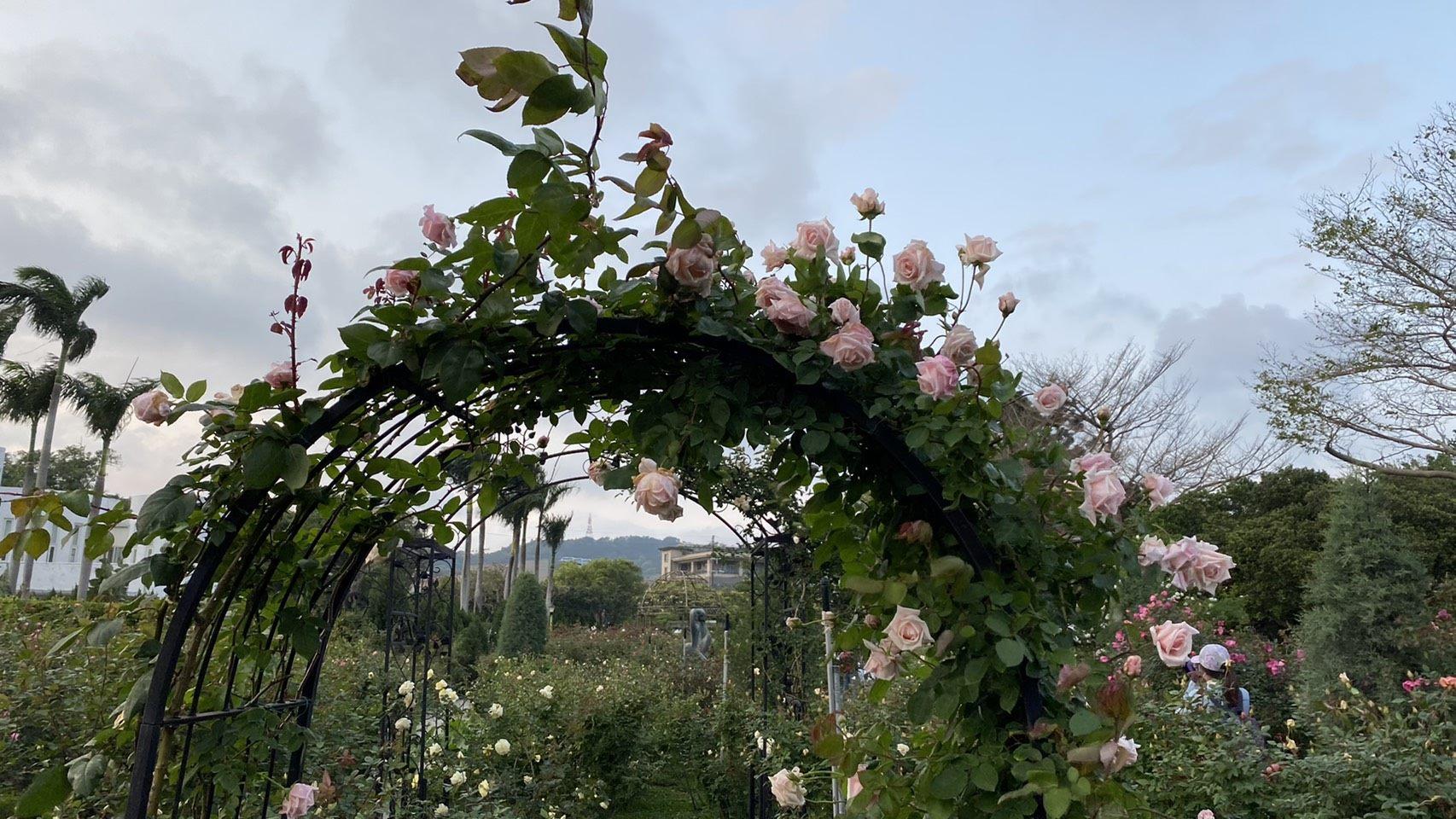 玫瑰攀爬著拱門營造浪漫氛圍
