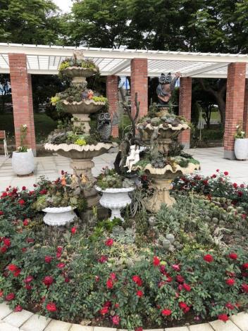 圖1玫瑰園中紅武士玫瑰花與多肉植物搭配成為精緻的端景