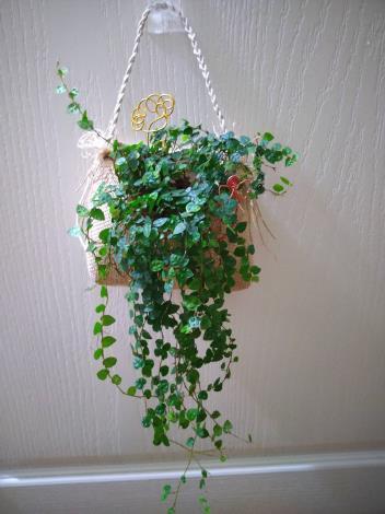 圖4、5月21日「植物苔球DIY」