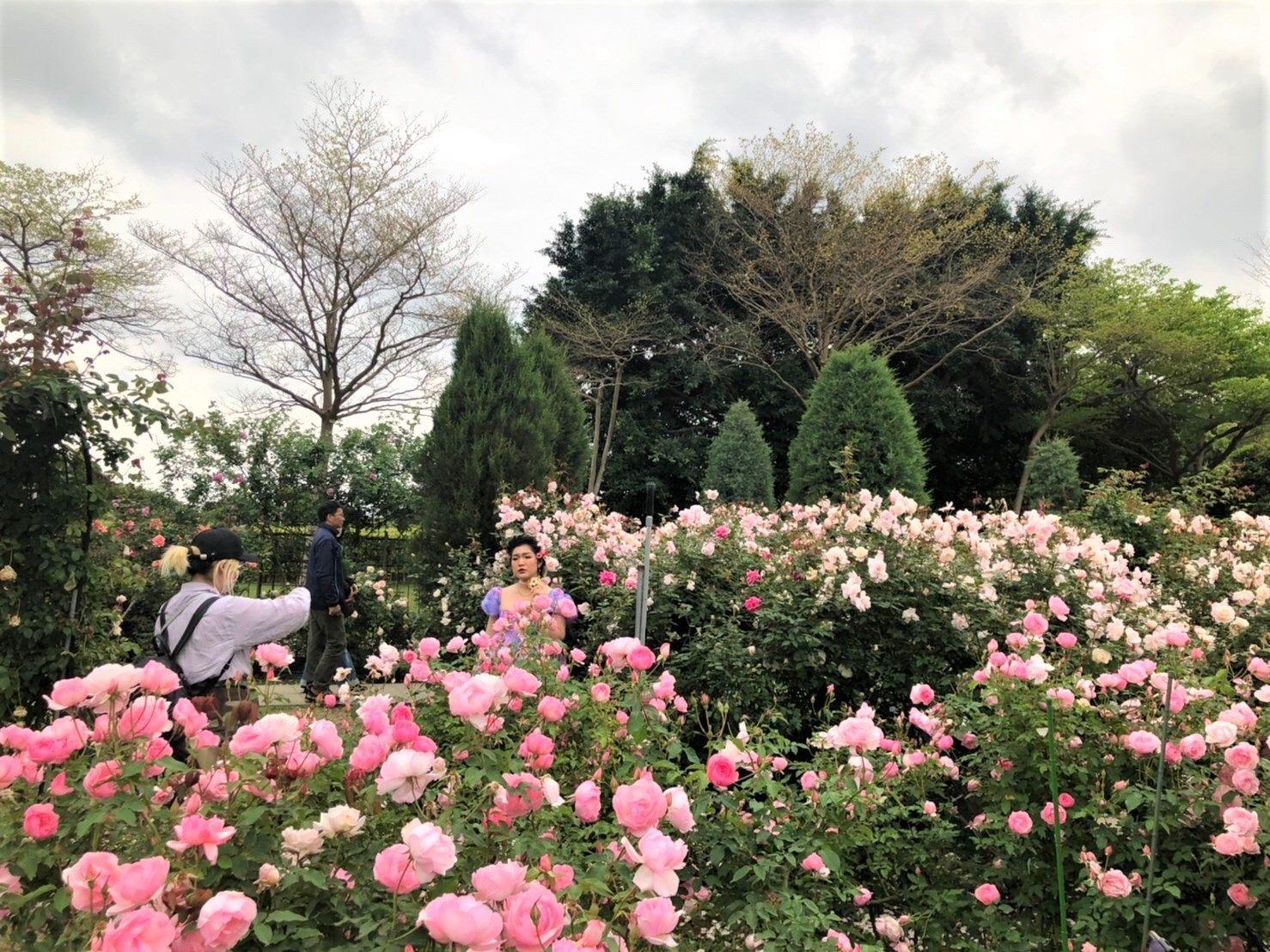 圖1.2021臺北玫瑰展玫瑰盛開,成為民眾拍照打卡熱點。