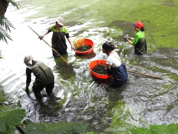 木柵公園萃湖志工團隊每年定期進行棲地維護