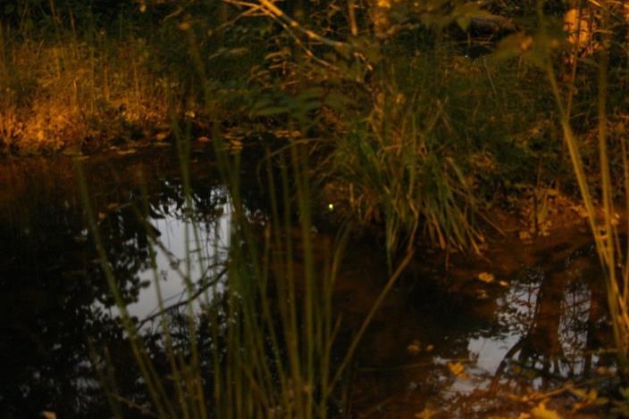 尋找大安森林公園的點點星光