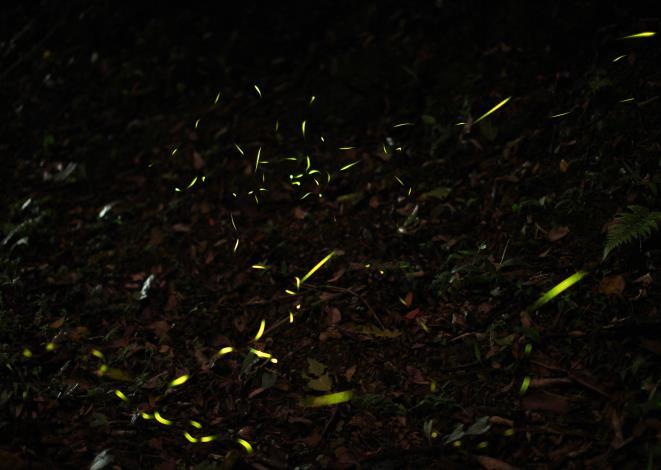 大安森林公園-螢火蟲復育計畫