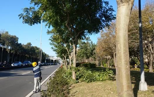 (圖2) 樹木加立穩固支柱