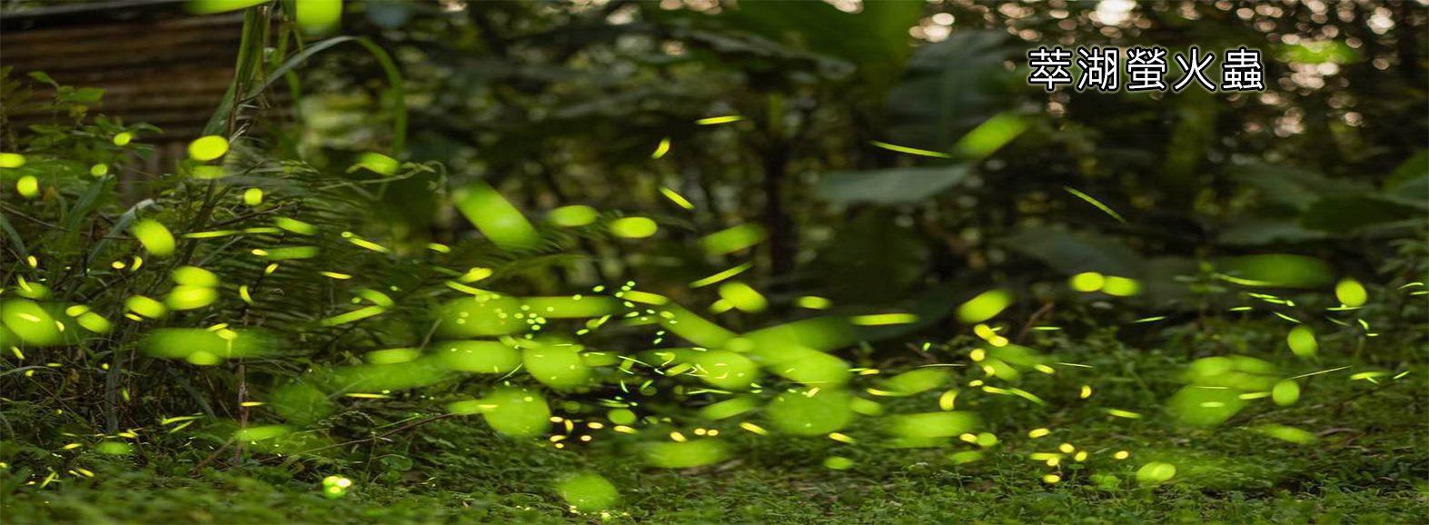 萃湖螢火蟲