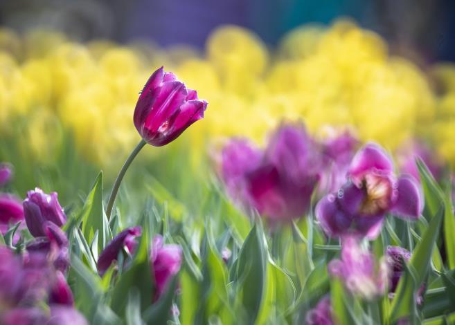 佳 作:「紫要美麗」攝自林秋德