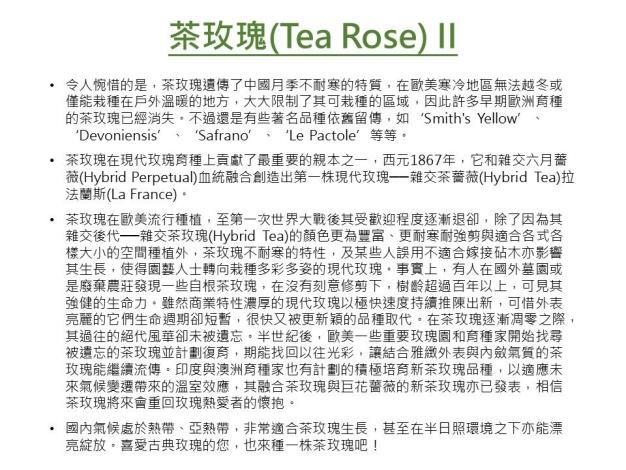 茶玫瑰II.JPG