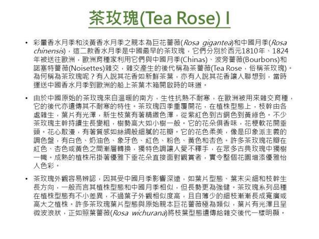 茶玫瑰I.JPG