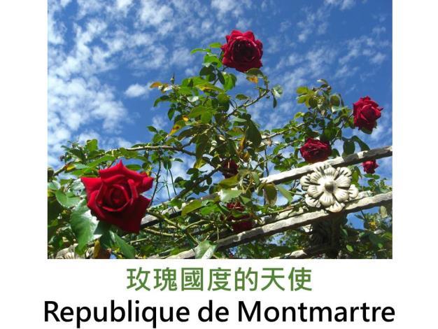半蔓性灌木玫瑰,育出:2011法國,紅色,古典杯形,中香