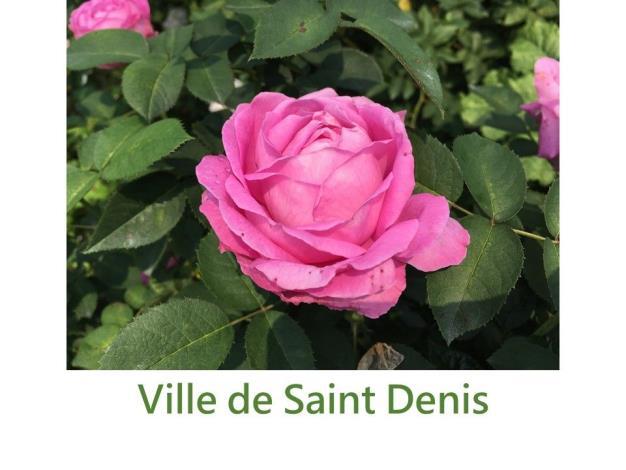 育出:1853法國.粉紅色.平開型