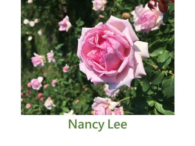 育出:1879英國,粉色,濃香