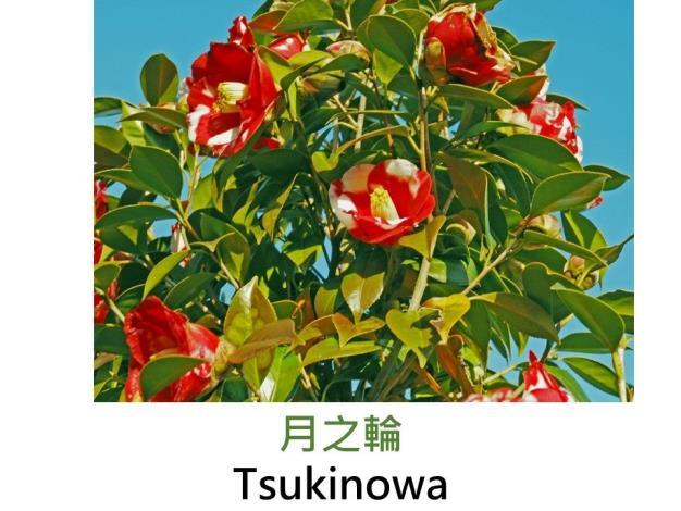 月之輪Tsukinowa.JPG