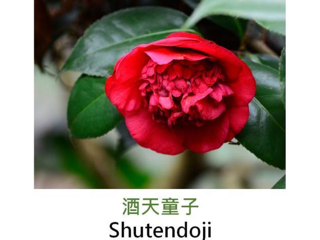 酒天童子Shutendoji.JPG