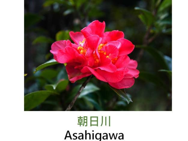 朝日川Asahigawa.JPG