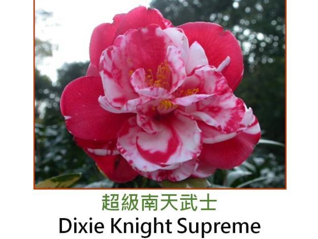 超級南天武士Dixie Knight Supreme.JPG