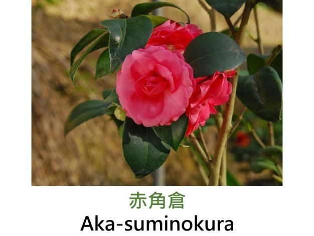 赤角倉Aka-suminokura.JPG