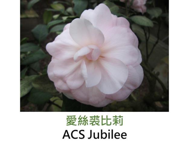 投影片29.JPG