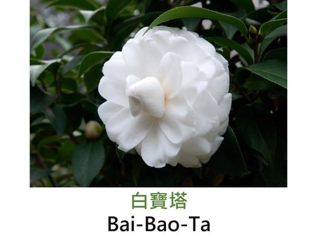 白寶塔Bai-Bao-Ta.JPG
