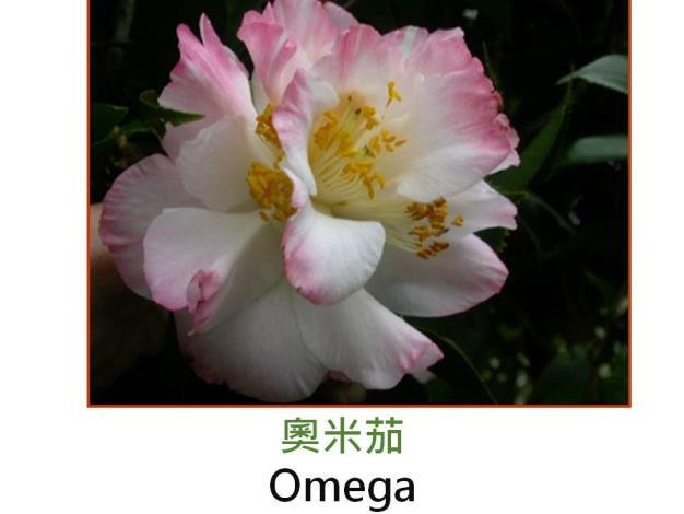 奧米茄Omega.JPG