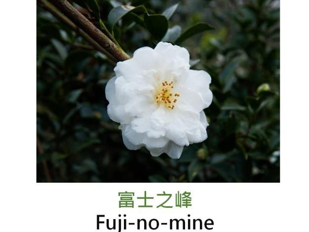 富士之峰Fuji-no-mine.JPG