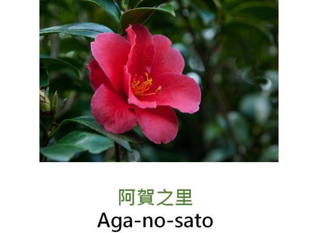 阿賀之里Aga-no-sato.JPG