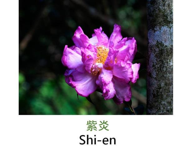 紫炎Shi-en.JPG