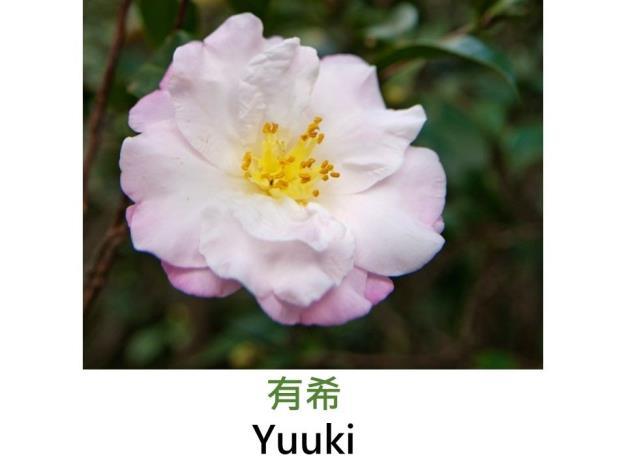 有希Yuuki.JPG
