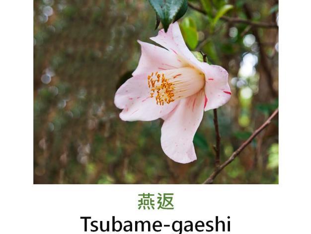 燕返Tsubame-gaeshi.JPG