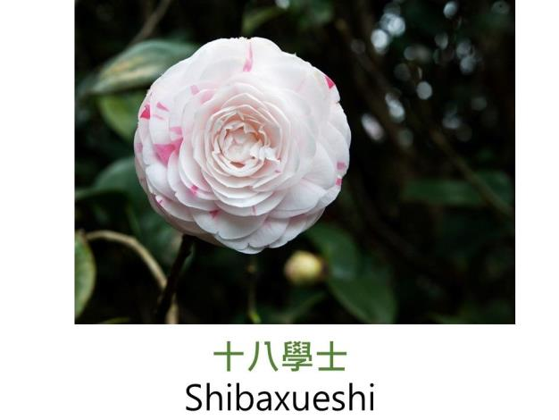 十八學士Shibaxueshi.JPG