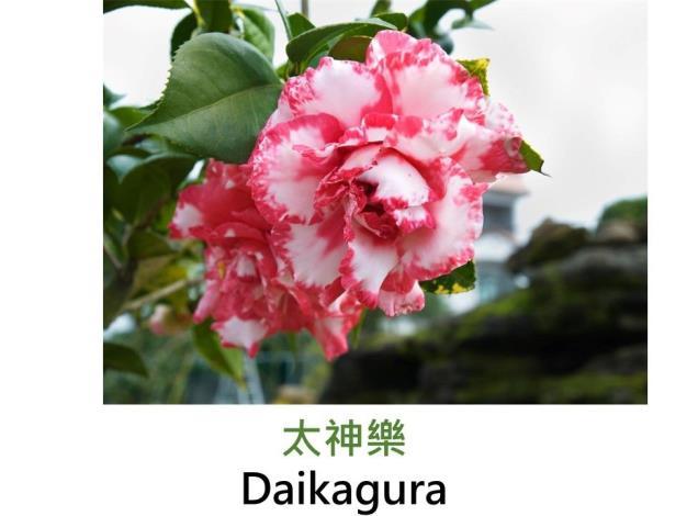 太神樂Daikagura.JPG