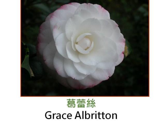 葛蕾絲Grace Albritton.JPG