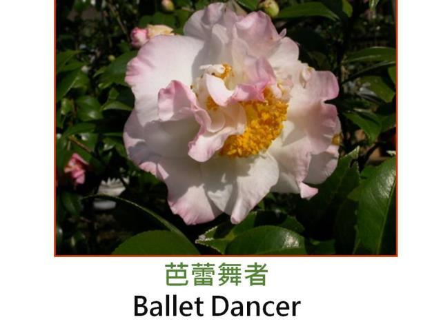 芭蕾舞者Ballet Dancer.JPG