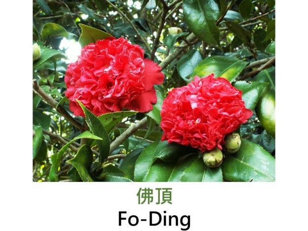 佛頂Fo-Ding.JPG