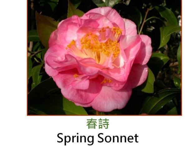 春詩Spring Sonnet.JPG