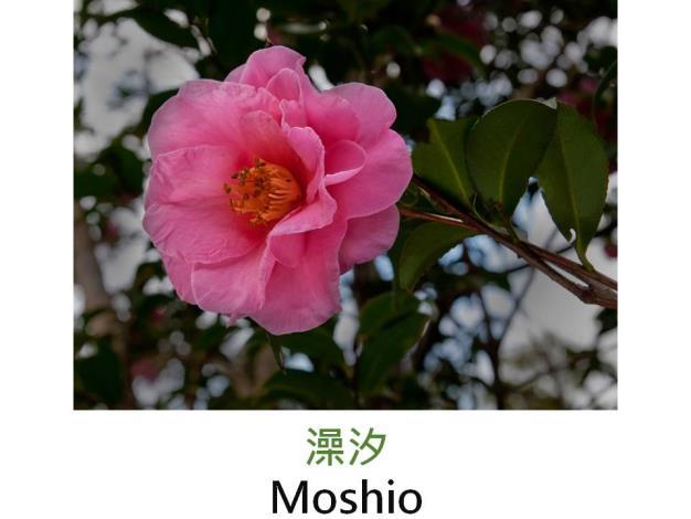 澡汐Moshio.JPG