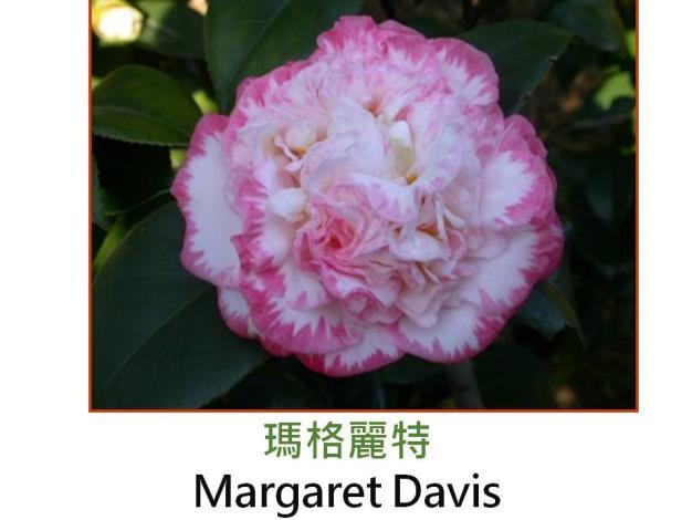 瑪格麗特Margaret Davis.JPG