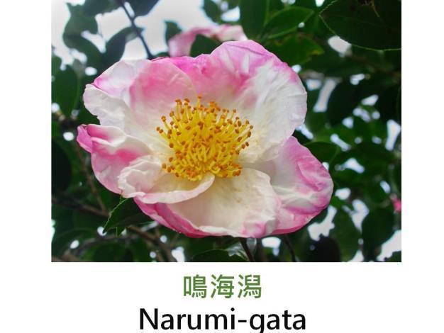 鳴海潟Narumi-gata.JPG
