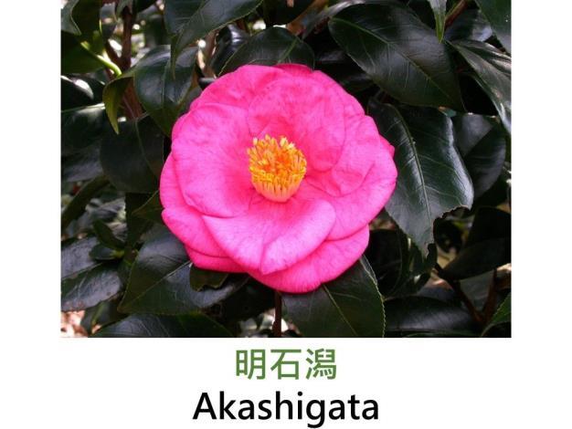 明石潟Akashigata.JPG