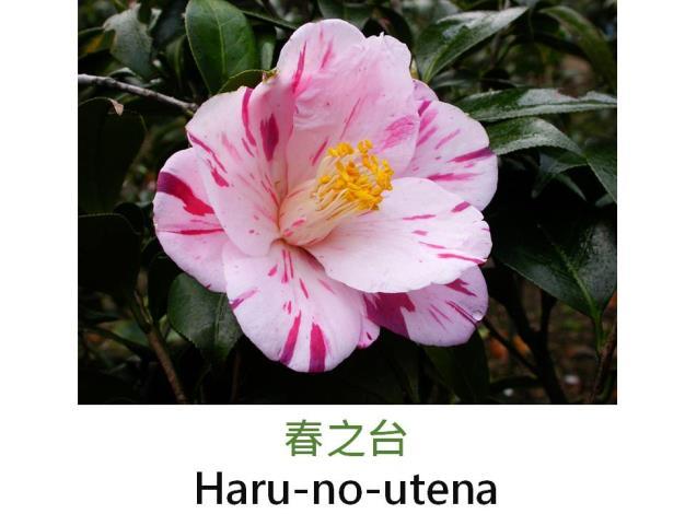 春之台Haru-no-utena.JPG