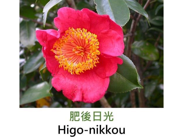 肥後日光Higo-nikkou.JPG